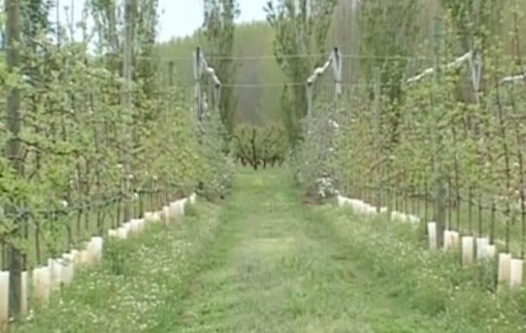 Derivats de l' ou i terra de pomes