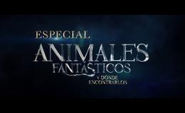 Imagen de Especial Animales Fantásticos y dónde encontrarlos en Atresplayer