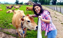 Imagen de Down on the Farm en CBeebies