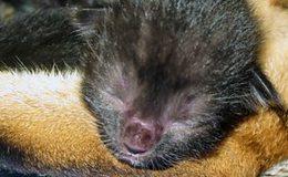 Imagen de Meet the Kittens