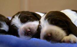 Imagen de Meet the Pups