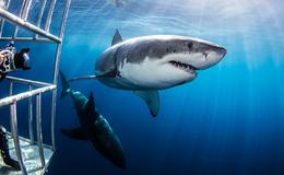 Imagen de Cómo sobrevivir a un tiburón