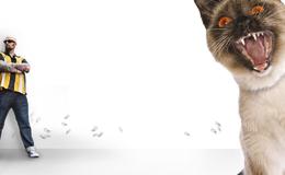 Imagen de El encantador de gatos