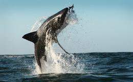 Imagen de El reino del tiburón