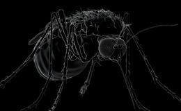Imagen de Mosquito