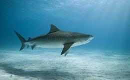 Imagen de Naufragio entre tiburones
