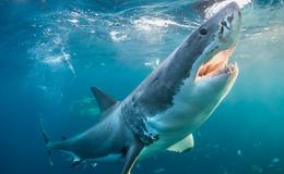 Imagen de Tiburones gigantes de Cuba