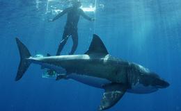 Imagen de Tiburones