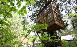 Imagen de Tu cabaña en un árbol