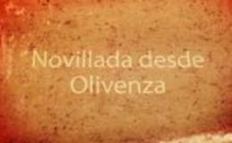 Imagen de Novilladas de la Feria de Olivenza 2015 en Canal Extremadura