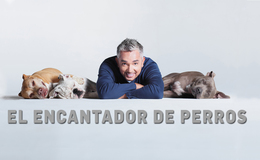 Imagen de El encantador de perros en Mitele