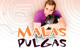 Imagen de Malas Pulgas en Mitele