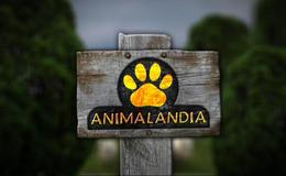 Imagen de Animalandia en RTPA (Asturias)