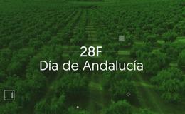 Imagen de Especial 28F Día de Andalucía (2020)