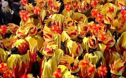 Imagen del vídeo 40a. Rua del Carnaval de Terra Endins